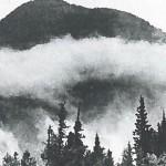 La taiga siberiana Crédito: russiapedia